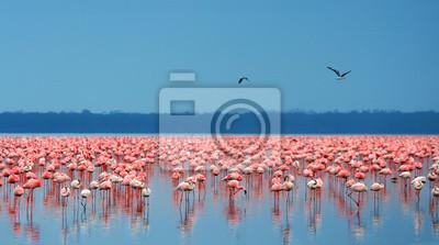 Wall mural flocks of flamingo