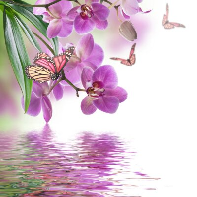 Wall mural Floral background of tropical orchids and  butterfly