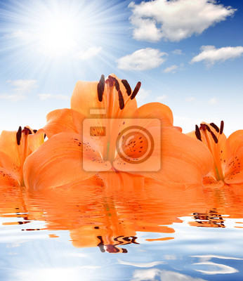 floral background with orange lily