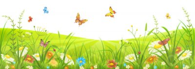 Wall mural Floral summer or spring meadow with green grass, flowers and butterflies