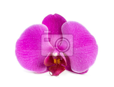 Flower blooming orchid