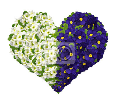 Flower heart from primrose isolated on white background