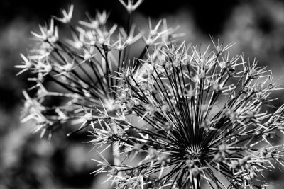 flower in black and white close up