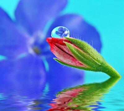 flower inside water drop