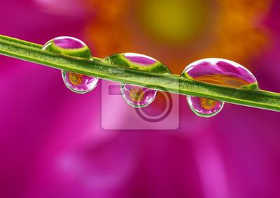 Wall mural flower mirroring in rain drops - macro