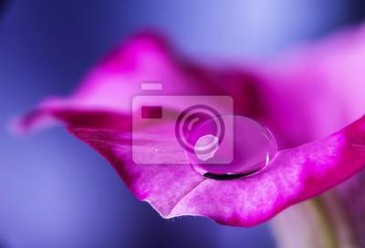 flower petal with drop