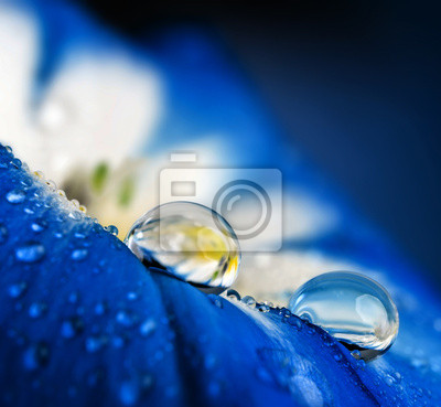 Wall mural flower petal with drops