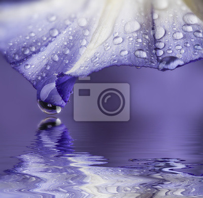 flower petal with drops