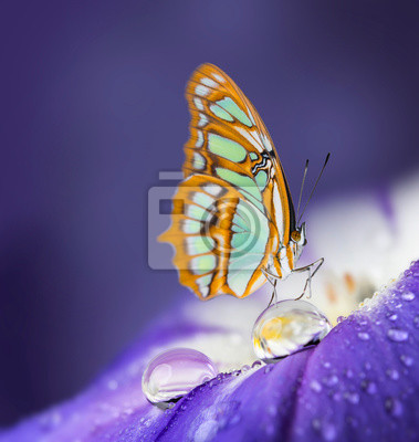 flower petal with drops and butterfly