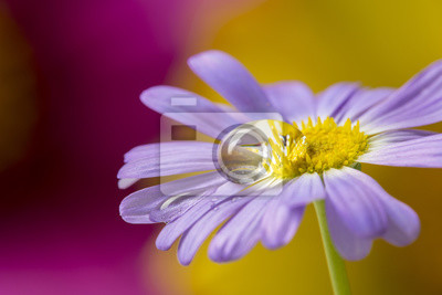 flower with rain drops - a macro photography