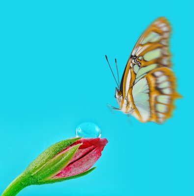 flower with water drops and a thisty butterfly