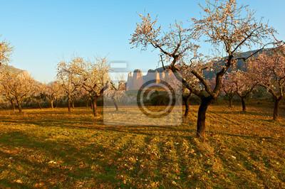Flowering Almonds
