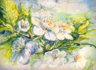 Wall mural Flowering branch of the cherry tree watercolor painted
