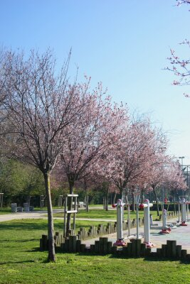 Flowering trees on the promenade in Kadikoy. District Moda. Istanbul. March 2019