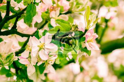 flowers  apple