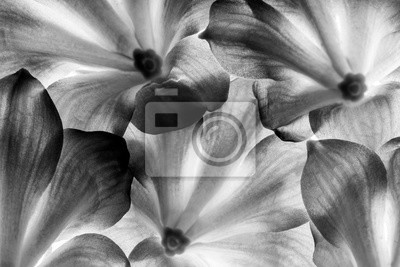flowers in detail - macro texture in black and white