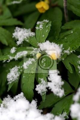 flowers in snowfall