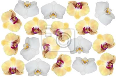 Wall mural flowers phalaenopsis
