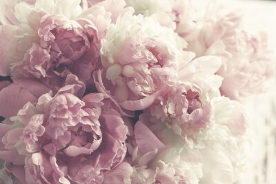 Wall mural Fluffy pink peonies flowers background