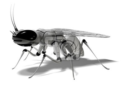 Wall mural fly