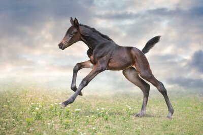 Foal run gallop on green pasture against sky