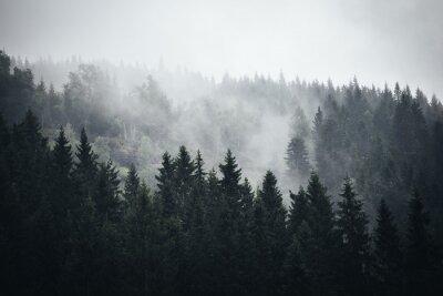 Wall mural Fog in Norwegian Forest