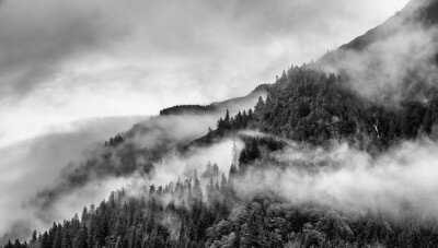 Wall mural fog on mountain top with pine tree