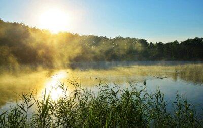 Foggy morning by the pond. Summer misty landscape at sunrise.