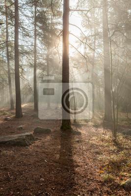 Foggy morning sun light forest