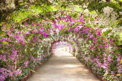 Wall mural footpath in a botanical garden with orchids lining the path.