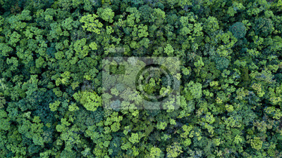 Wall mural Forest and tree landscape texture background, Aerial top view forest, Texture of forest view from above.