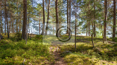 Forest in Filand at sunny day