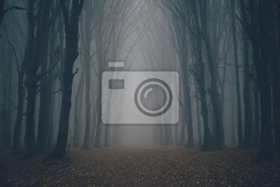 Wall mural Forest in fog with mist. Fairy spooky looking woods in a misty day. Cold foggy morning in horror forest with trees
