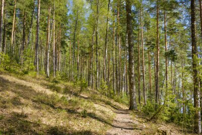 Forest landscape at summer day in Finland