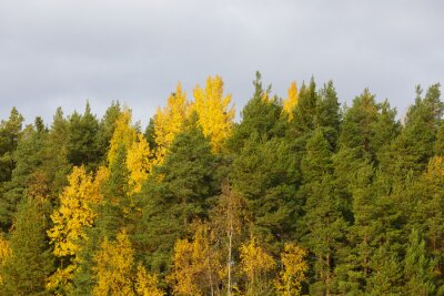 Forest treetops foliage in autumn colors