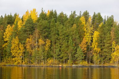 Forest treetops foliage in autumn colors at lakeside