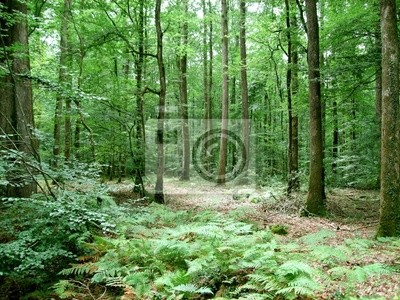 Wall mural forests
