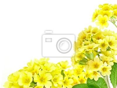 frame from primroses