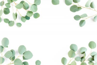 Wall mural frame of green branches, eucalyptus leaves on a white background. flat layout, top view