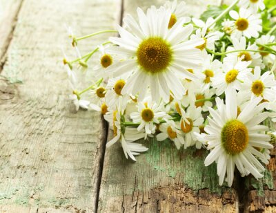 Wall mural Fresh chamomile flowers bouquet on the wooden background