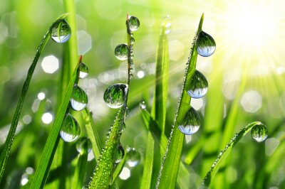 Wall mural Fresh grass with dew drops close up
