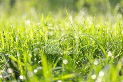 Fresh green grass in the summer sunny day.