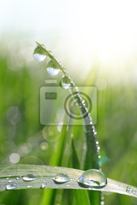Wall mural Fresh green grass with dew drops closeup. Nature Background