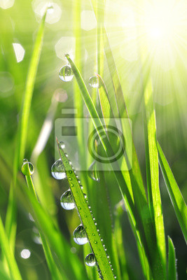 Wall mural Fresh green grass with water drops closeup. Soft focus. Nature Background