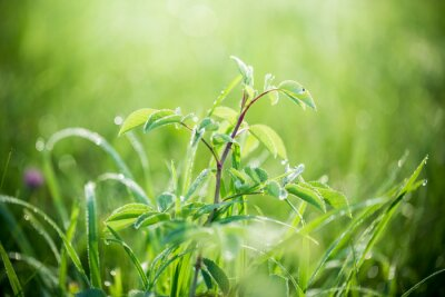 Wall mural Fresh green grass with water drops on the background of sunlight beams. Soft focus