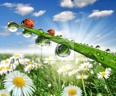 fresh morning dew and ladybug