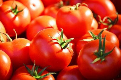 Wall mural Fresh organic tomatoes on the street stall