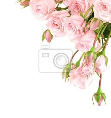 Wall mural Fresh roses border