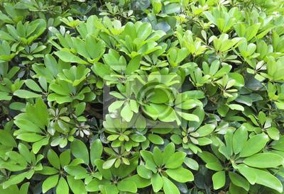 fresh spring leaves - background