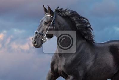 Frisian stallion with long beautiful mane run against sunset dark sky